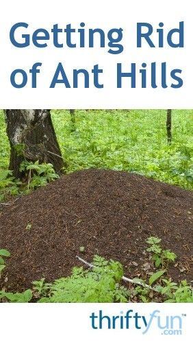 Getting Rid Of Ant Hills Get Rid Of Ants Home Remedies For Ants