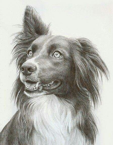 Pin De Rooxcastanedavega En Dibujo Dibujos De Perros Dibujos De