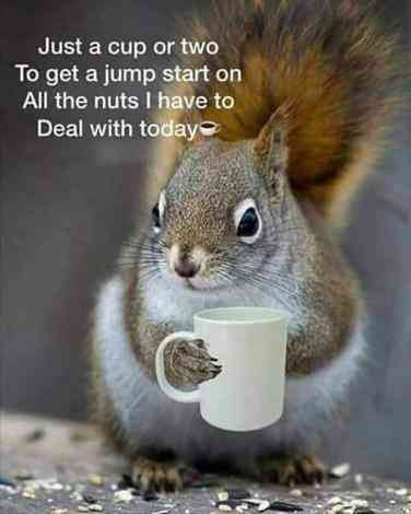 40 Funny Coffee Memes & Quotes For March — Caffeine Awareness Month | YourTango