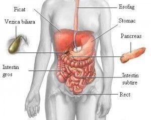 Fa cunostinta cu bacteriile bune din intestin!   kok.ro