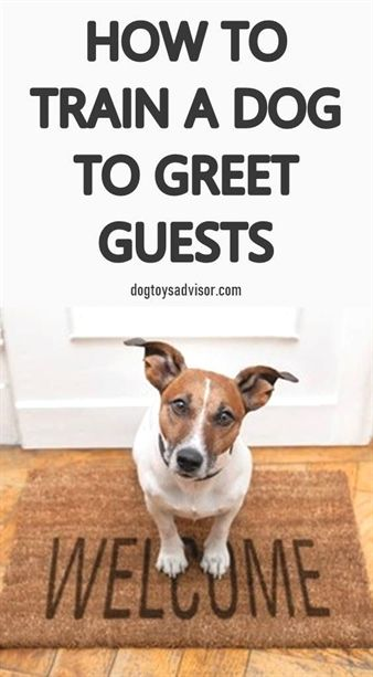 Dog Training Treats Pouch Dog Training Quizzes Dog Training