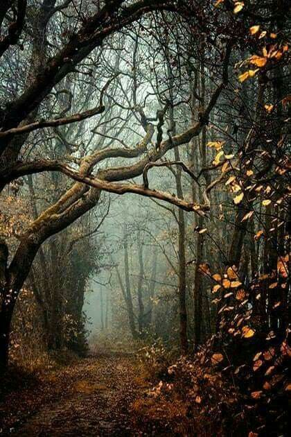 Pin By Judy Sanders On Fall Scenery Nature Photography Landscape