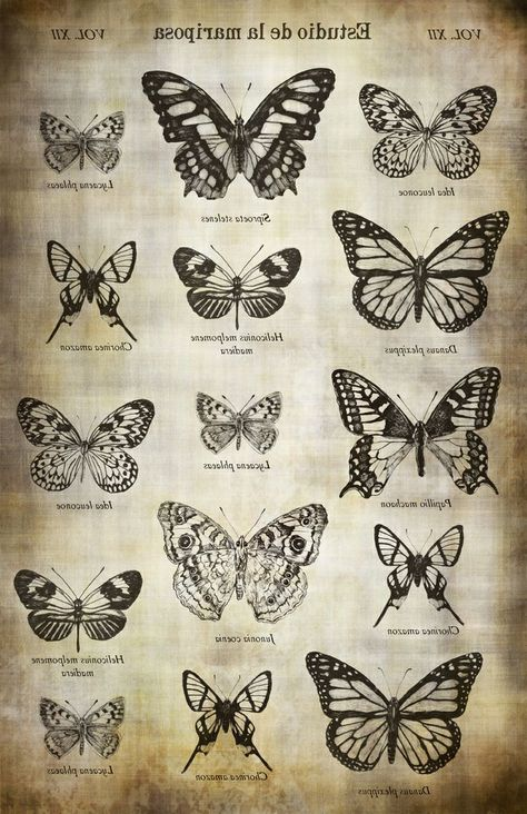 Butterfly Study Image Transfer Paper - Antique Caramel