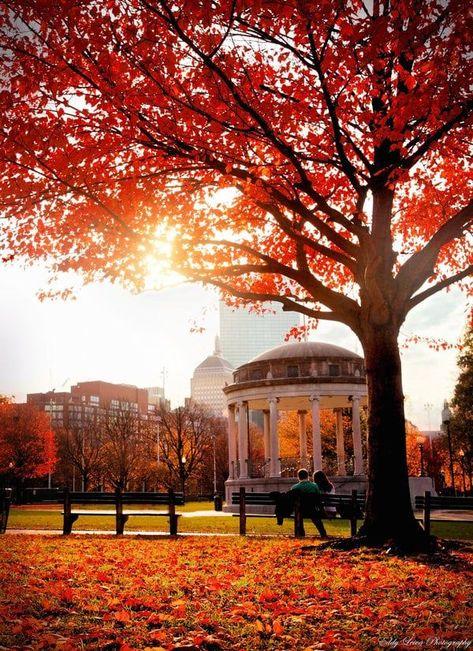 There is no better city to experience the vibrant beauty of Autumn in than Boston. In Boston, Boston Weekend, Boston Common, Autumn Scenes, Boston Strong, Autumn Aesthetic, Boston Massachusetts, Autumn Photography, Autumn