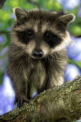 Very Cute As Long As She Stays Out Of My Attic Okay Was Really Cute Even In The Attic Lol Animals Animals Beautiful Cute Animals