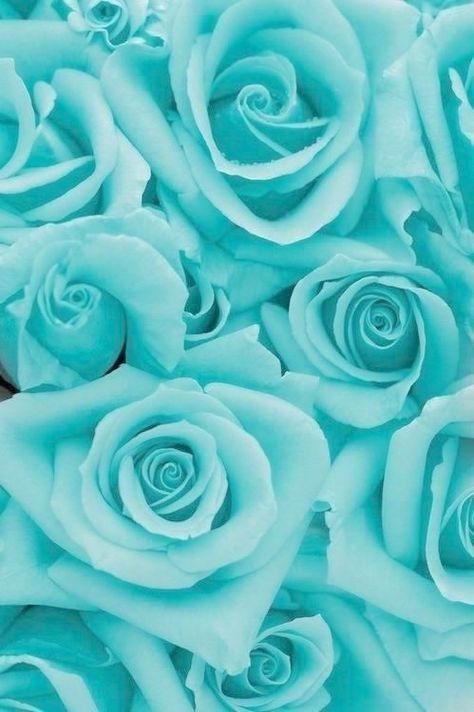 49 Ide Tosca Hijau Hijau Mint Wallpaper Hidup Iphone