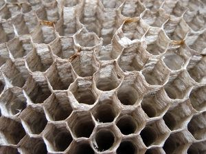 Wasp nest and barnacles - some of the best natural structures