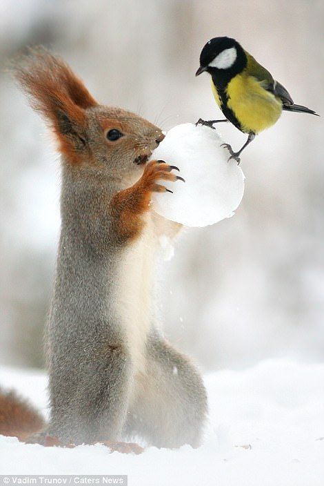 Squirrel looks set to snowball cheeky bird after it steals its nut