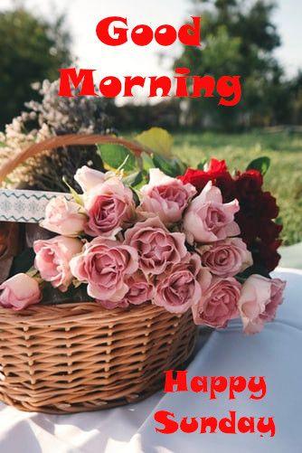 Good Morning Happy Sunday In 2020 Best Flower Delivery Flower Delivery Flowers
