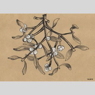 Inkillustration Gui Foret Fleur Planche Botanique Avec