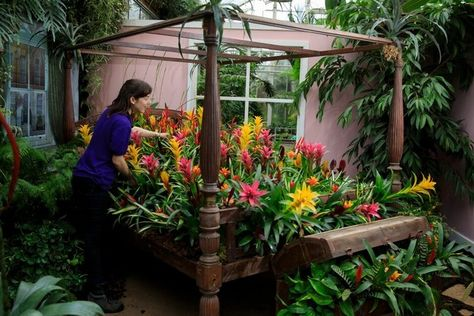 House Plants Take Over At Rhs Garden Wisley In New Exhibition In 2020 With Images House Plants Plants Houseplants