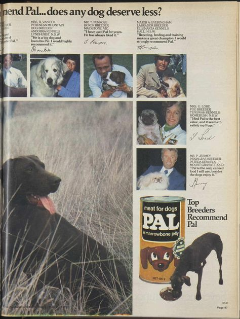 Issue 21 May 1975 The Australian Women S Wee Labrador