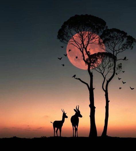 The sun set in Africa .....