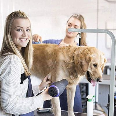 Best Portable Dog Grooming Table For All Your Pet Needs With Images Dog Grooming Cat Grooming Pets Cats