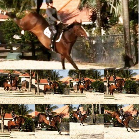 Yes, Amie does her own stunts!  #buckaroo #Stuntgirl #stuntrider #FlippingVegas #goliathcompany #equestrian #horse #hunterjumper #WinterEquestrianFestival