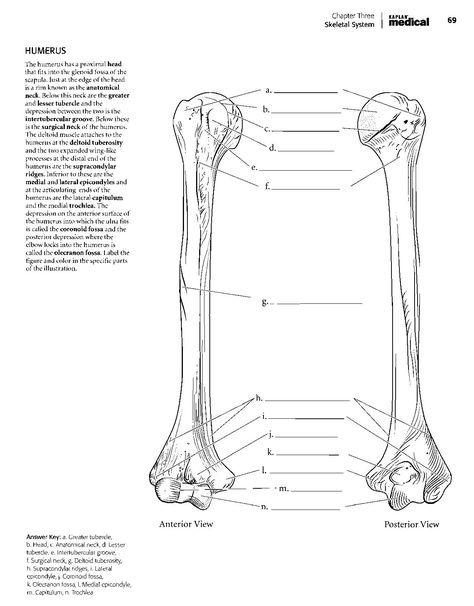 - Kaplan Anatomy Coloring Book.pdf Anatomy Coloring Book, Coloring Books, Coloring  Book Album