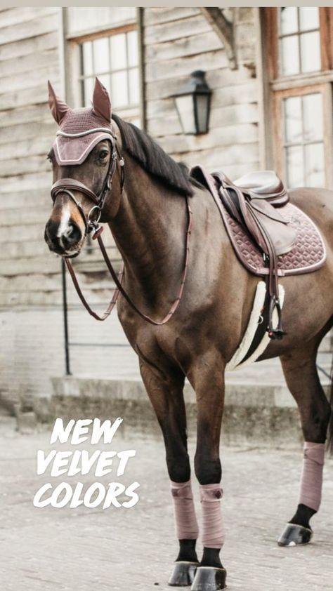 English Horseback Riding, Horseback Riding Lessons, English Riding, Horse Saddle Pads, Horse Saddles, Funny Horses, Cute Horses, Western Horse Riding, Cute Baby Dogs