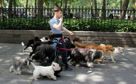 Dogwalker's Craigslist Ad Goes Viral, And The Reason Is