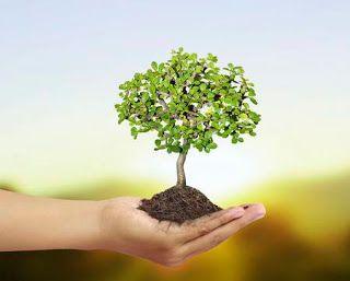 تفسير الاحلام مجانا تفسير رؤية شجرة صغيرة في الحلم الاشجار فى المنام Herbs Tree Dream Meanings