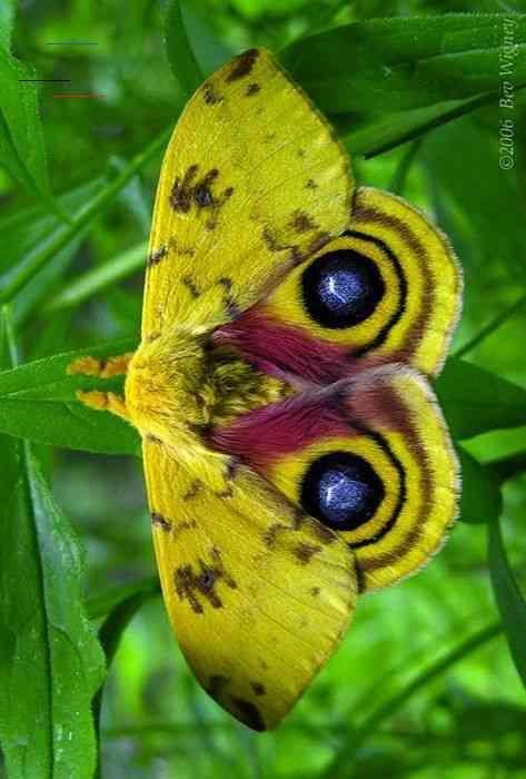 Utahusa In 2020 Libelle Insekt Motte Einzigartige Tiere