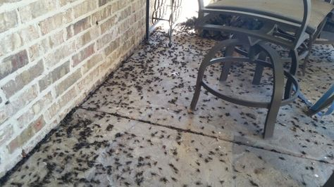 8 Best Hopping Insects Images On Pinterest  Bugs Insects And Endearing Small Jumping Bugs In Bathroom Inspiration