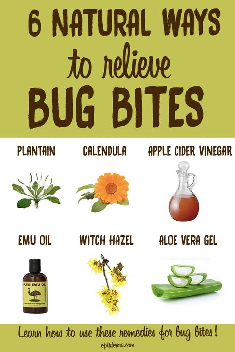 Do You Have A Bug Bite That Blisters Learn How To Soothe Insect