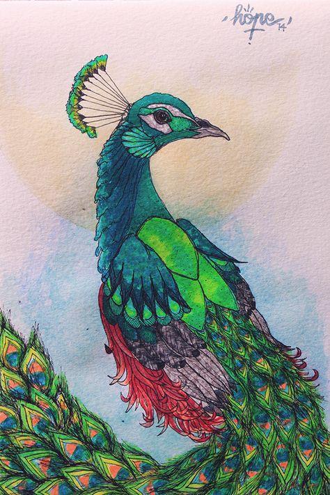 Peacock on Behance