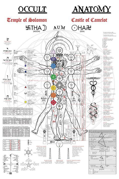 The Occult Anatomy of the human body on the Vitruvian Man, originally illustrated by Leonardo da Vinci. The Tree of Life (Sephiroth), Kabbalah, Kundalini, Tantra/Yoga Chakras, Astrology, Tarot and Alchemy.  After discovering various versions of this image online in different languages, I became frustrated that I could not find a version in english, and also much of the artwork was blurry and unable to make sense of. I spent nearly 3 years on this project, translating, researching, and re...