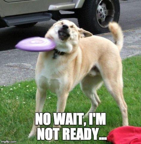 30+ Funny Animal Memes To Make You Laugh Till You Drop - Lovely Animals World #dogmemes #funnydog #funnydogmemes