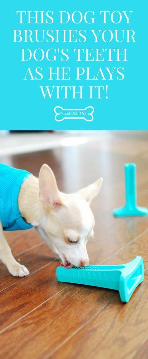 Review This Must See Dog Toy Actually Brushes Your Dog S Teeth