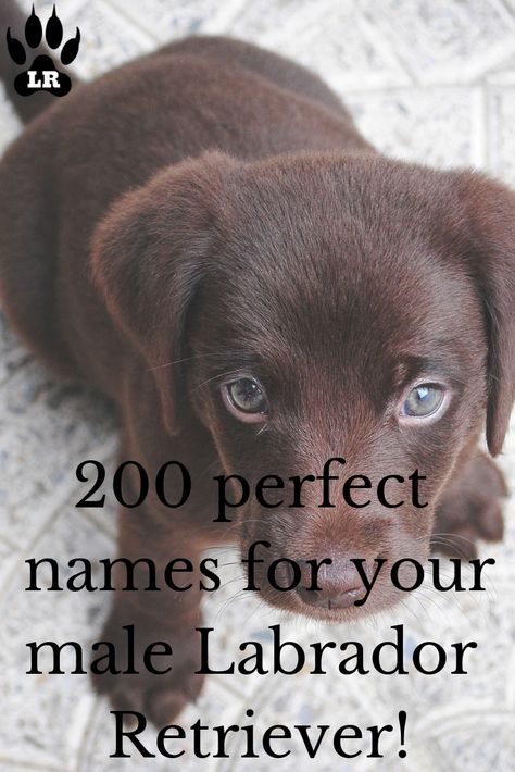 430 Boy Dog Names A Z Labrottie Com Dog Names Dog Names Male Cute Names For Dogs