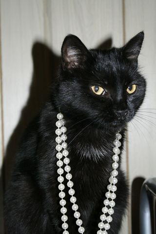 Black Cat Jewelry : black, jewelry, Close-up, Black, Wearing, Jewelry, EyeEm, Cats,, Royalty, Pictures