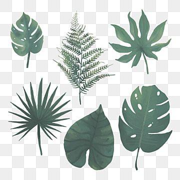 Aquarela Folhas Tropicais Tropical Selva Folha Imagem Png E Vetor Para Download Gratuito In 2021 Watercolor Leaves Leaves Illustration Tropical Leaves