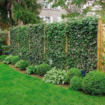 حديقة البيت On Twitter Fence Landscaping Large Backyard Landscaping Green Fence