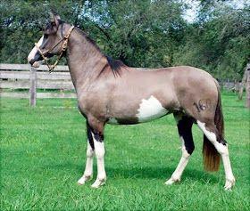 Pelajes De Caballos De La Raza Criolla Y Su Relación Con La Genética 11 Pelaje Overo Beautiful Horses Horses Horse Coloring