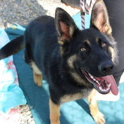 Zori Now Xena From The Yolo County Shelter Has Found Her