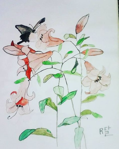 """Instagram'da Refika Ergen: """"#watercolor #watercolorflowers #butterfly #flowers #flower #natural #color #draw #insect"""""""