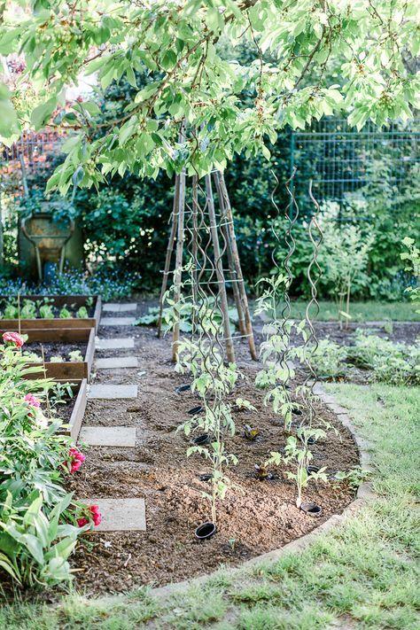Tomatenliebelei Von Der Aussaat Bis Zur Ernte Teil 4 Tomaten Auspflanzen Ausgeizen Dreierlei Liebelei Tomaten Garten Garten Pflanzen Selbstversorger Garten