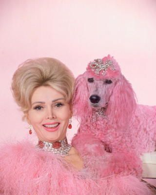 zsa zsa gabor & her poodle