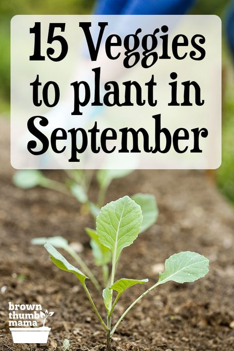 Vegetable Planting Calendar, Garden Plants Vegetable, How To Plant Vegetables, Fall Planting Vegetables, Garden Yard Ideas, Lawn And Garden, Garden Landscaping, Growing Veggies, Growing Plants