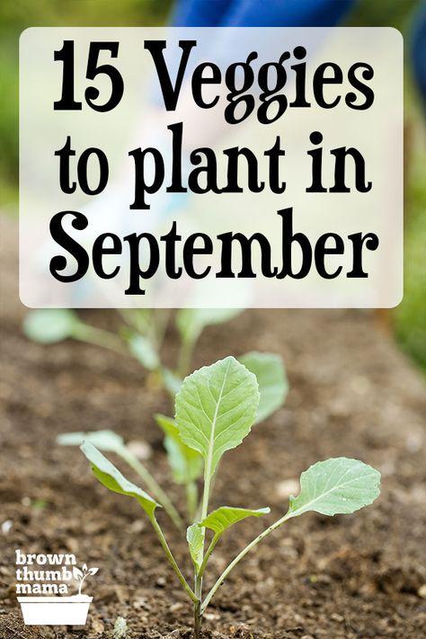 Vegetable Planting Calendar, Garden Plants Vegetable, How To Plant Vegetables, Fall Planting Vegetables, Growing Veggies, Growing Plants, Fall Plants, Autumn Garden, Edible Garden