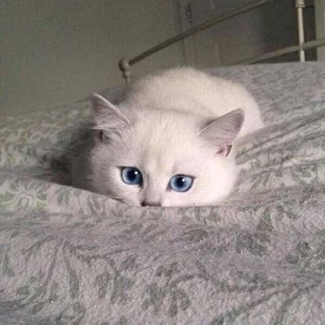 23+ Cutest Kittens And Cats You Will Ever See -