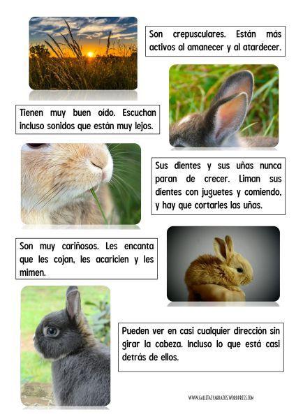 Proyecto Los Conejos 3 A 6 Anos Conejos Consejos Para
