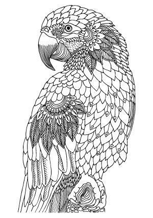 5 Parrot Coloring Pages Illustration By Keiti Free Printable Coloring Page Bird Coloring Pages Animal Coloring Pages Cool Coloring Pages