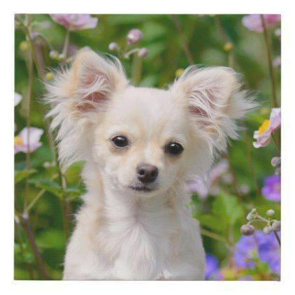 Niedlicher Langhaariger Sahne Chihuahua Hundewelpen Haustier Foto Imitat Leinwand Druck Hundewelpen Hunde Welpen Hunde