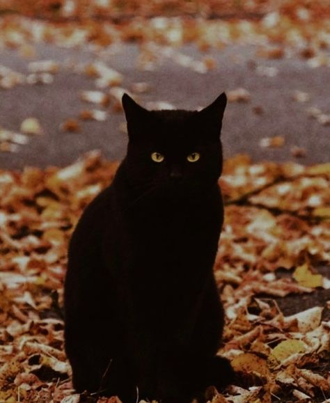 Image In Cats And Kittens Collection By Shorena Ratiani Black Cat Aesthetic Cat Aesthetic Black Cat