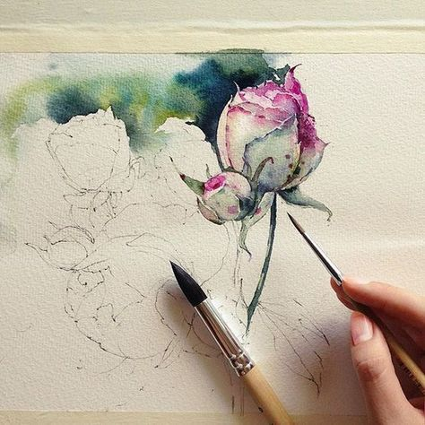 Roses Wip Watercolor Flowers Paintings Watercolor Illustration Watercolor