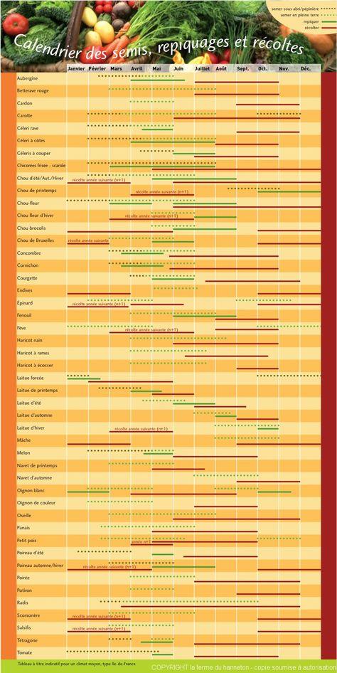 Calendrier des Semis, repiquage et récoltes