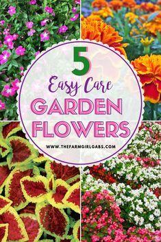 Five Easy Care Garden Flowers Www Thefarmgirlgabs Com