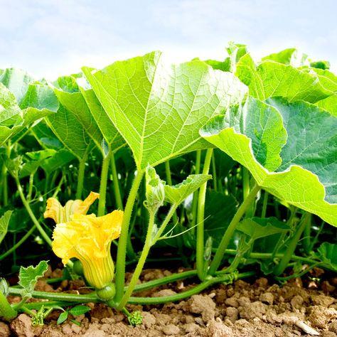 Arkansas Man Plants Mystery Seeds Being Shipped Across U.S.